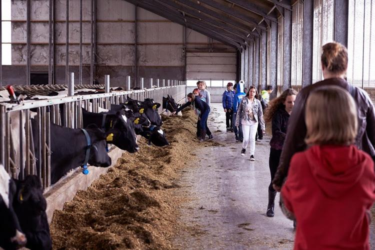 Lesmateriaal en boerderij-excursies