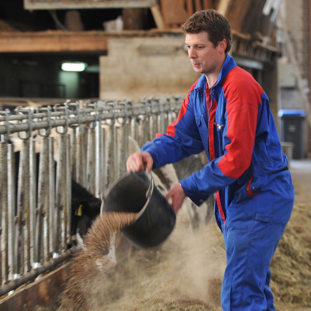 Zuivelondernemingen scherpen eisen voor veevoer aan