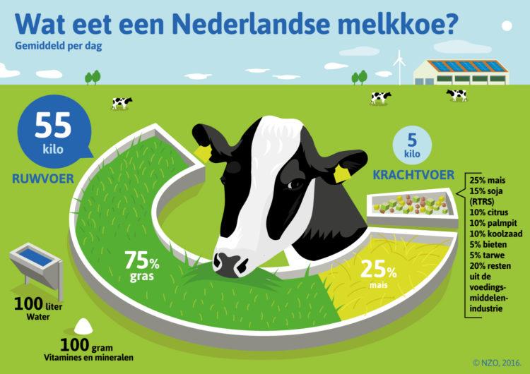 nzo-wat-eet-de-nederlandse-koe