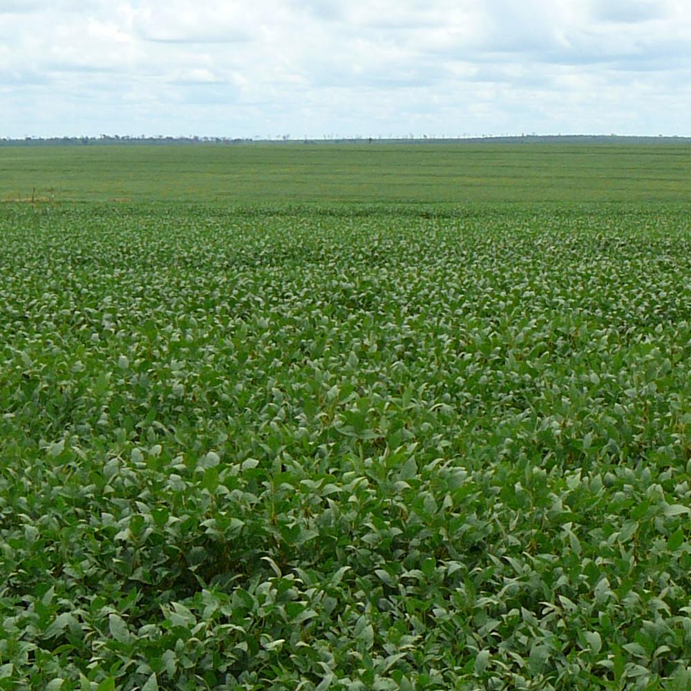 Nederlandse zuivelketen gebruikt 100% verantwoorde soja