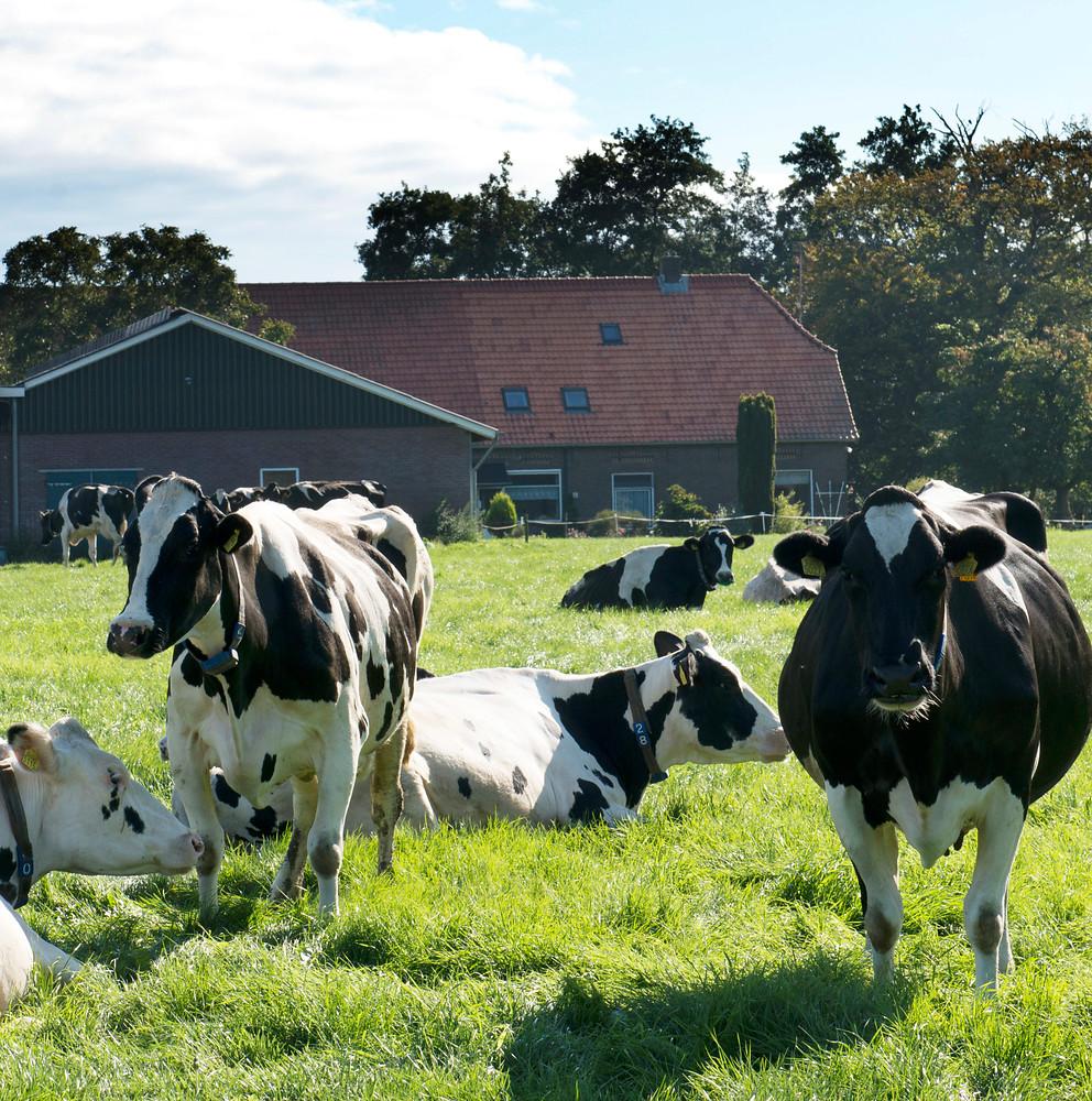 Nederlandse zuivelketen zorgt voor (h)eerlijke melk