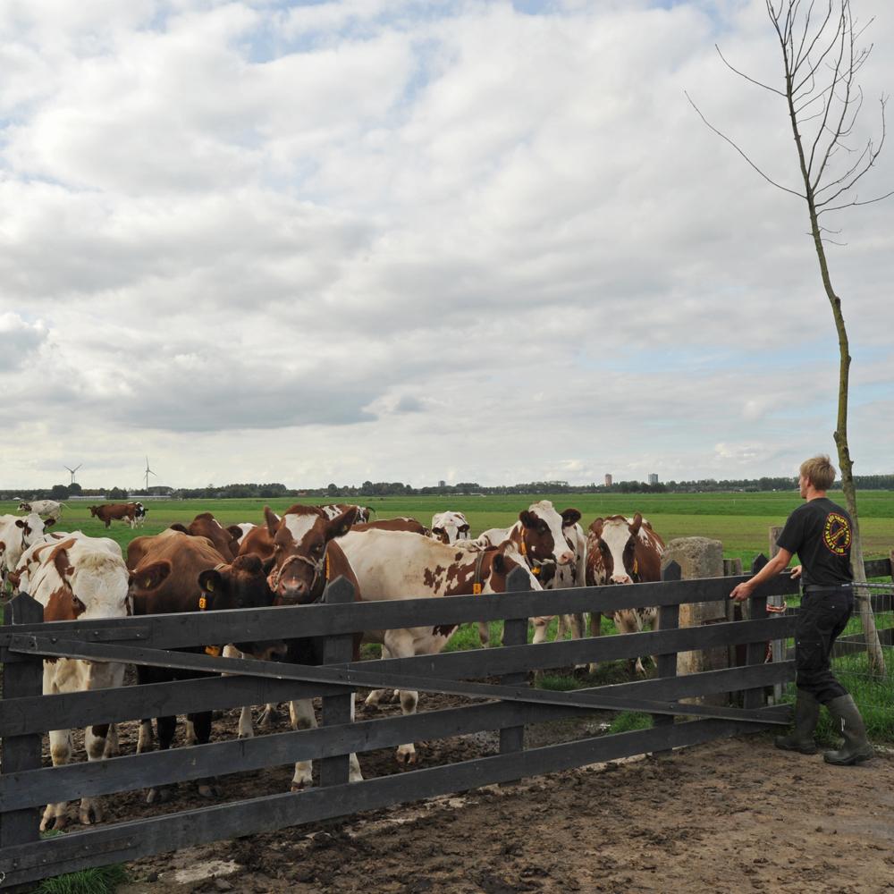 De melkveehouderij is en blijft grondgebonden