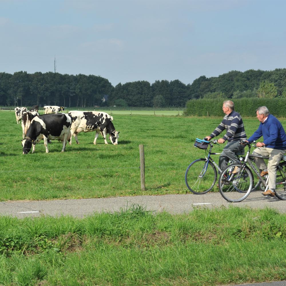 De melkveehouderij ontwikkelt zich met respect voor dier, omgeving en milieu