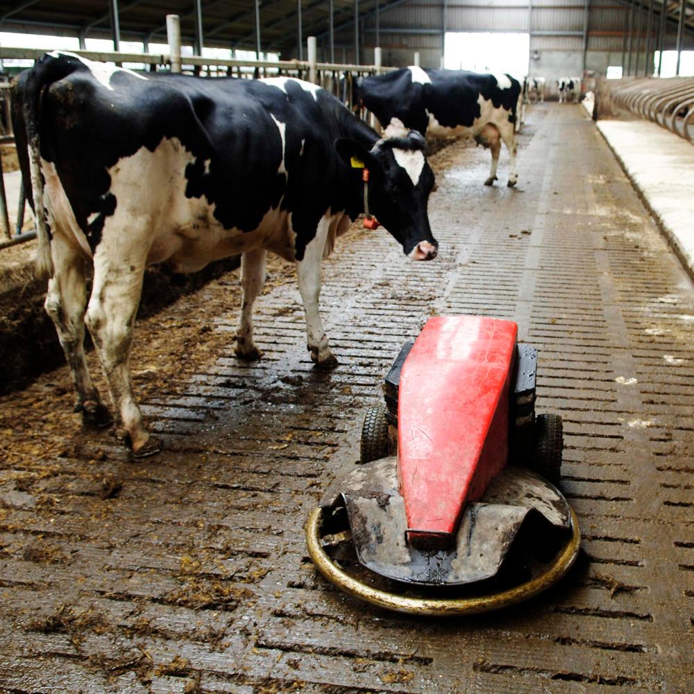 De zuivelsector stelt een grens aan de mestproductie