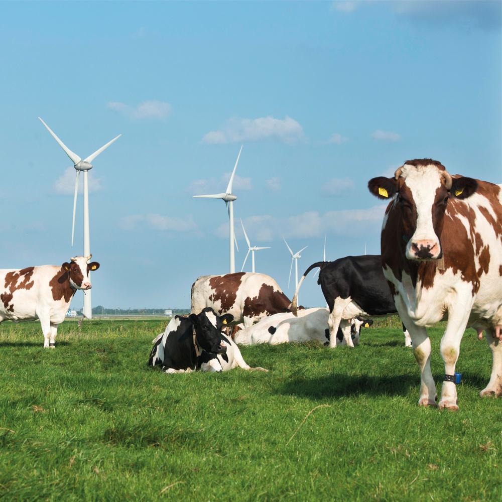 Zuivelsector committeert zich aan klimaatopgave