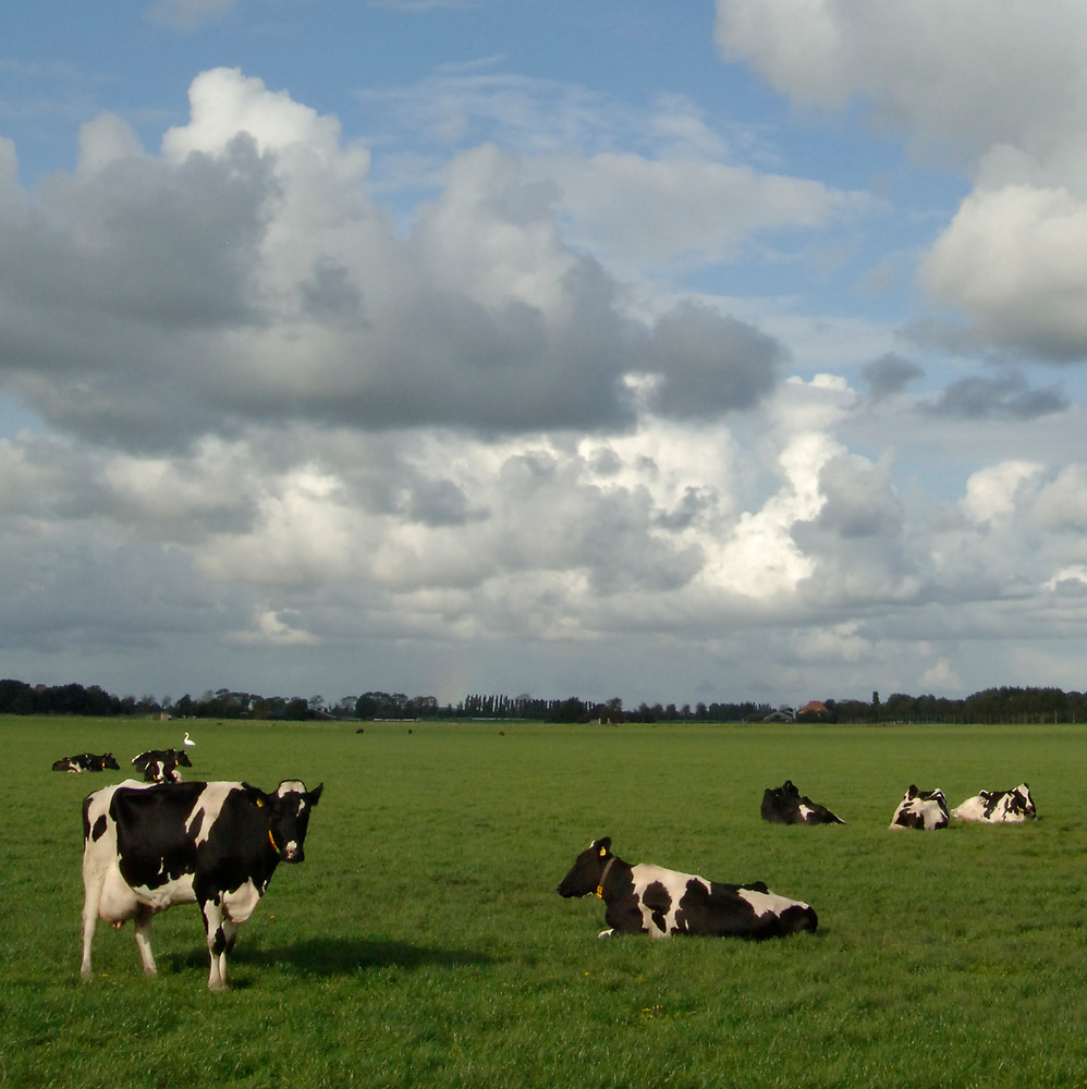 Dairy farming sector already achieves phosphate reduction objective