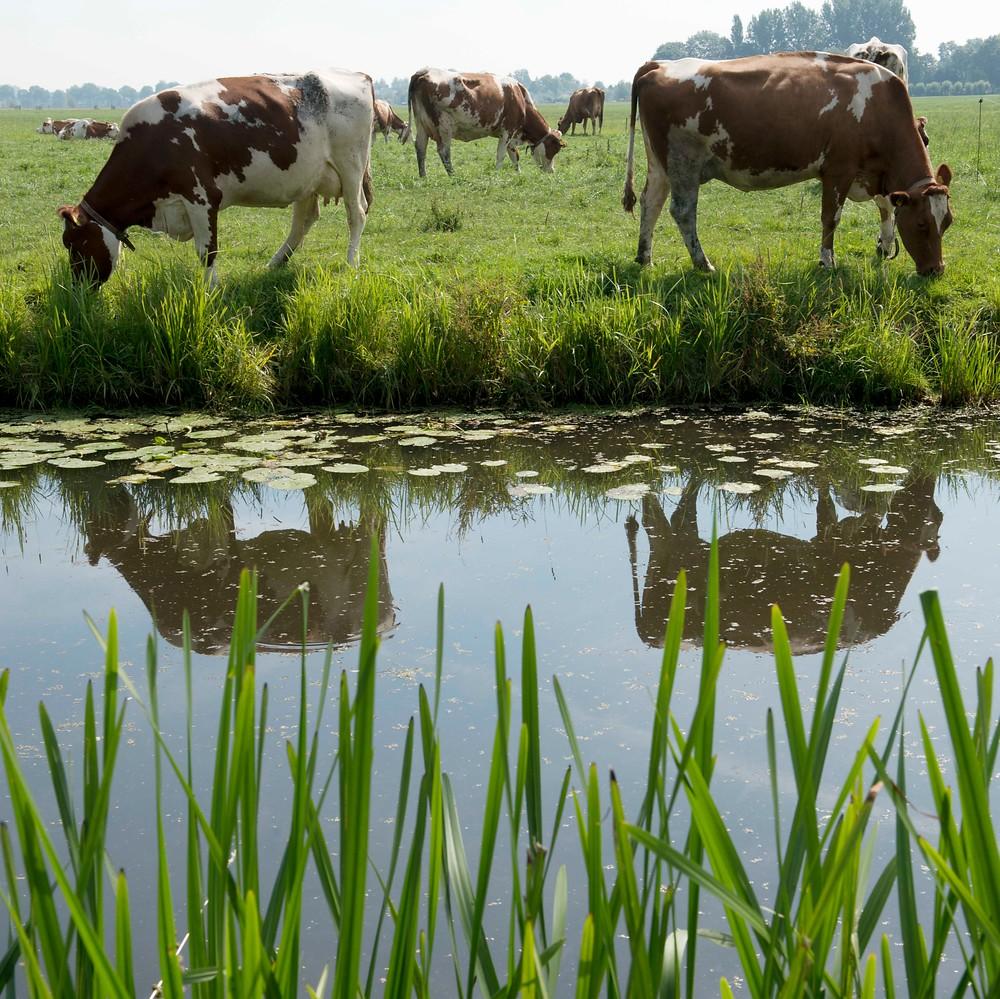 Duurzame Zuivelketen ondersteunt intentieverklaring voor herstel biodiversiteit
