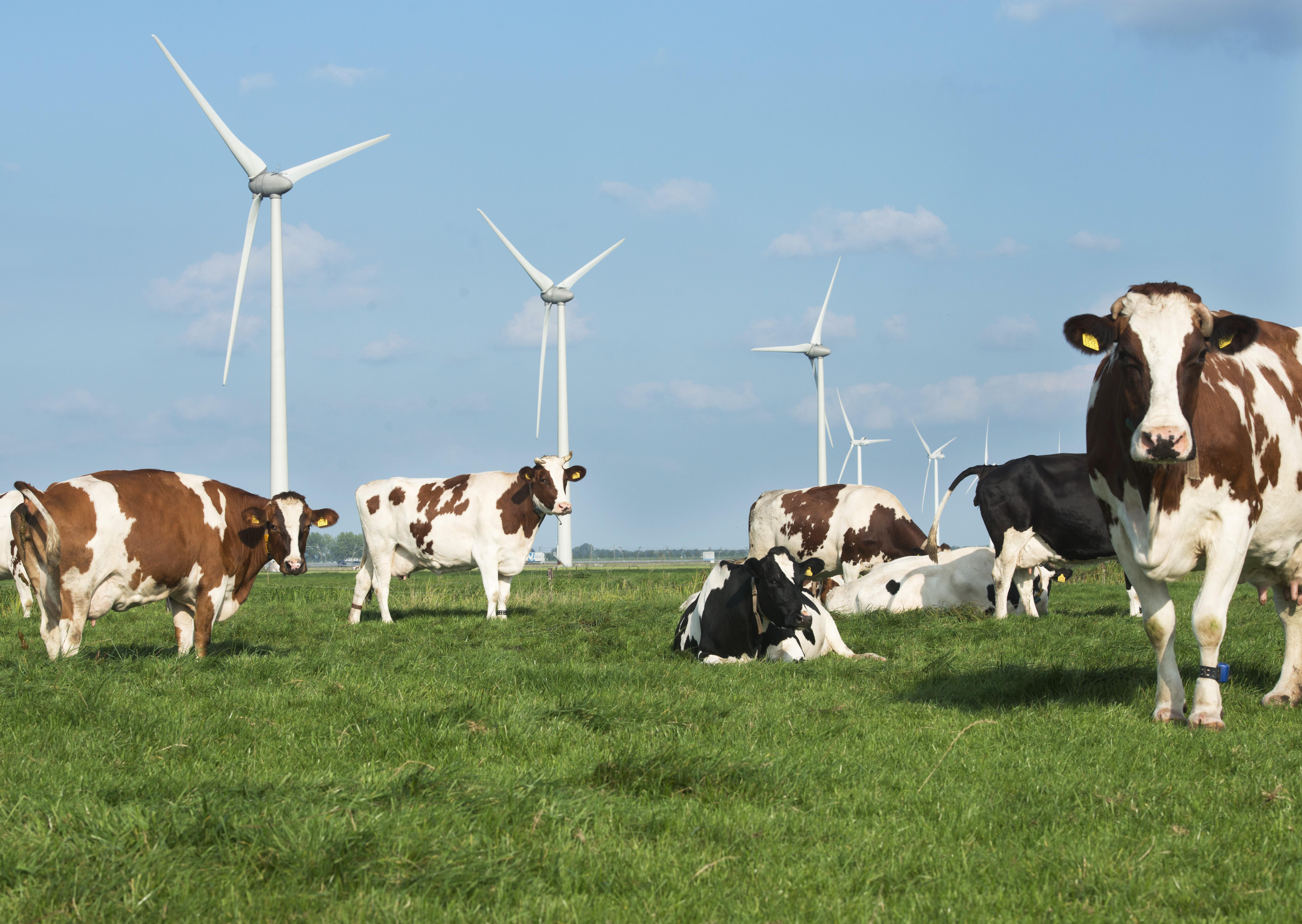 Dutch dairy sector takes measures to meet climate targets