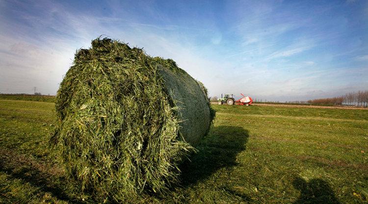 Gras van eigen land is onderdeel van een grondgebonden melkveehouderij.